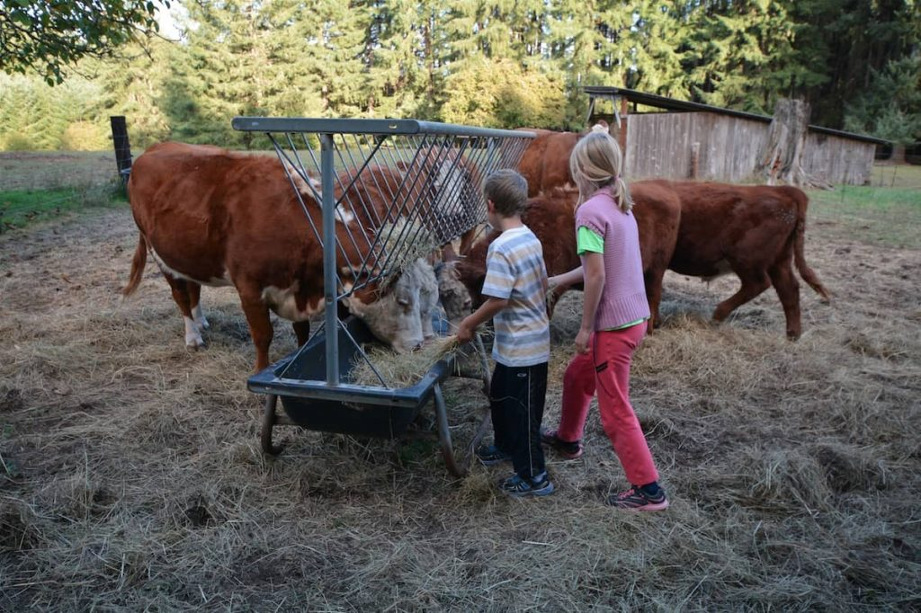Children feeding cows hay on a farm