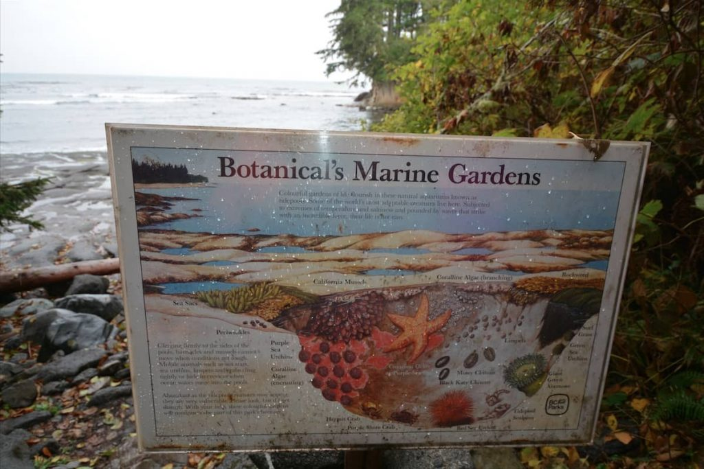 An interpretive sign for tidal pools along Olympic Peninsula in Washington State