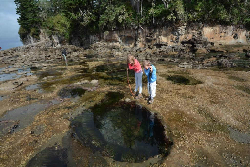 Kids exploring tidal pools on Olympic Peninsula in Washington State