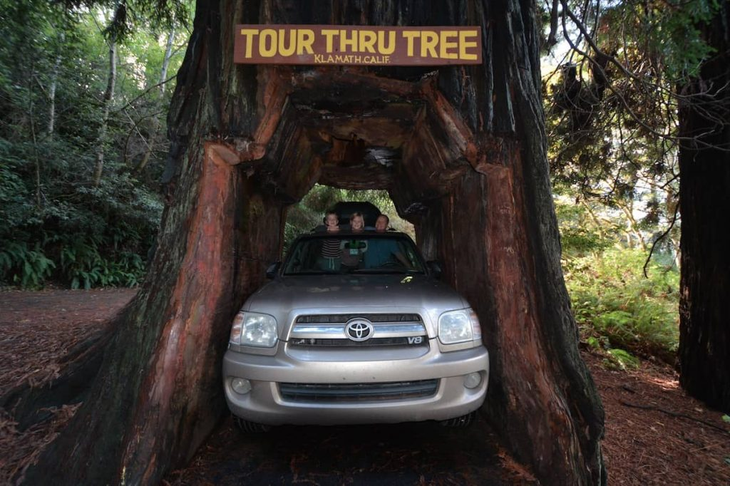 A gold Toyota Sequoia wedged inside the Tour Thru Tree in Klamath California