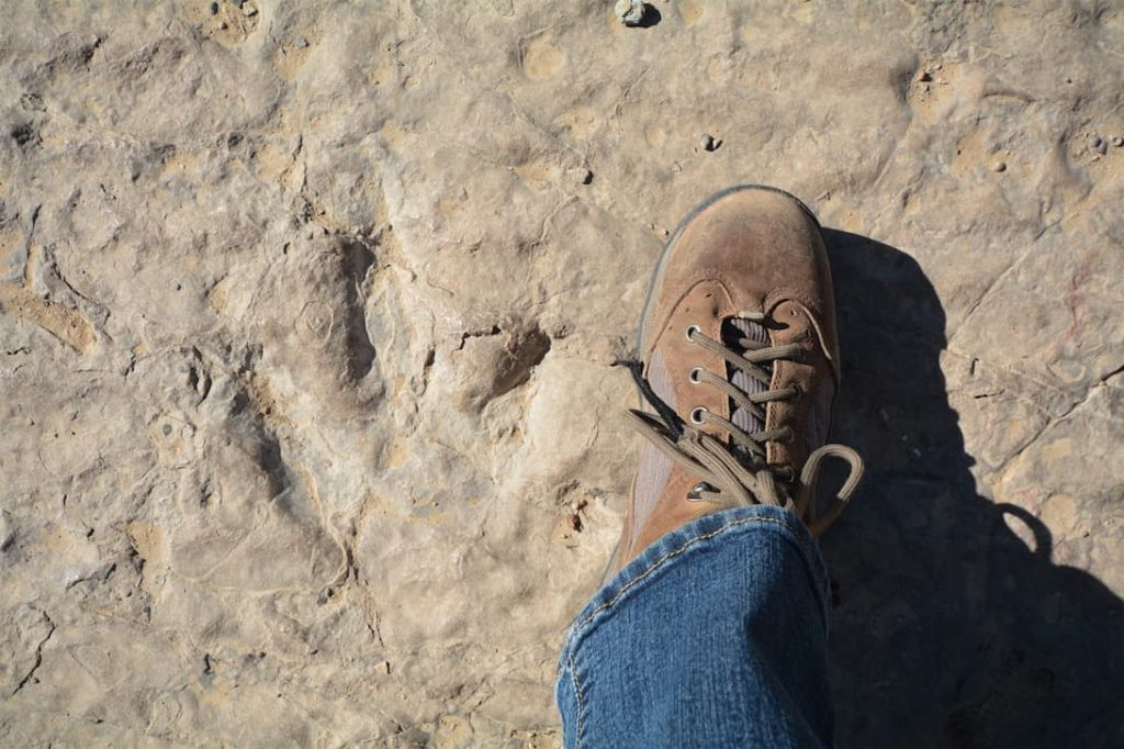 Comparing a dinosaur footprint to my shoe