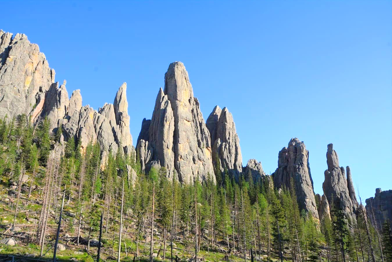 Cathedral Spires rise above the floor of Custer State Park in the Black Hills of South Dakota