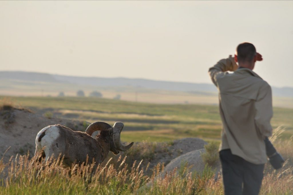 A dumb man illegally approaches wildlife in Badlands National Park, South Dakota