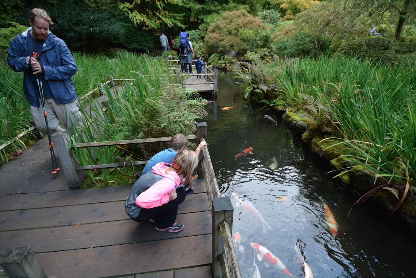 A family looks at koi fish in a koi pond in Portland Oregon