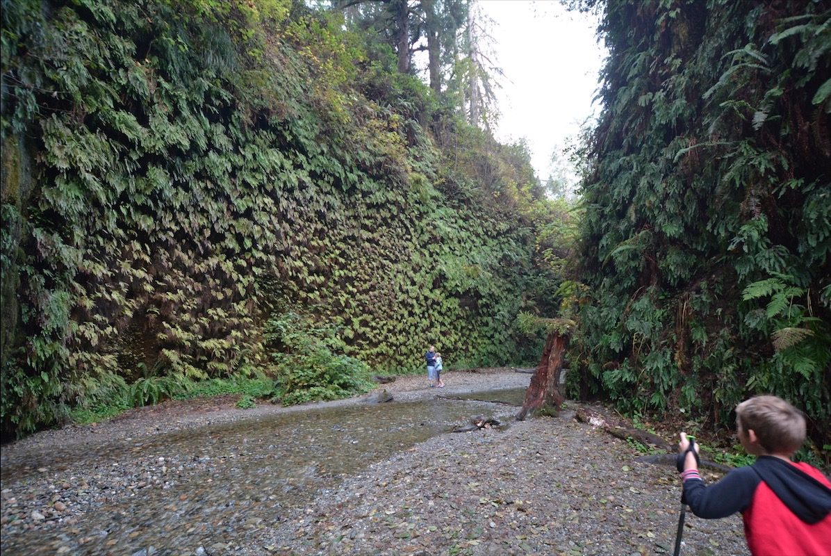 Exploring Redwoods national and state parks