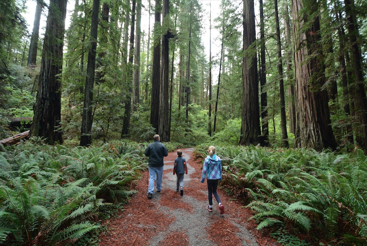 A family explores redwood national forest