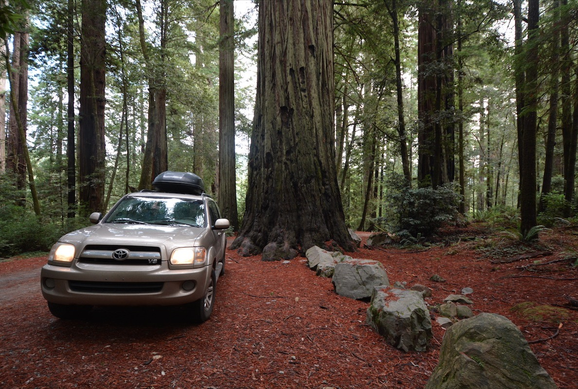A 2006 Toyota Sequoia parked on the forest floor in Redwoods National Park