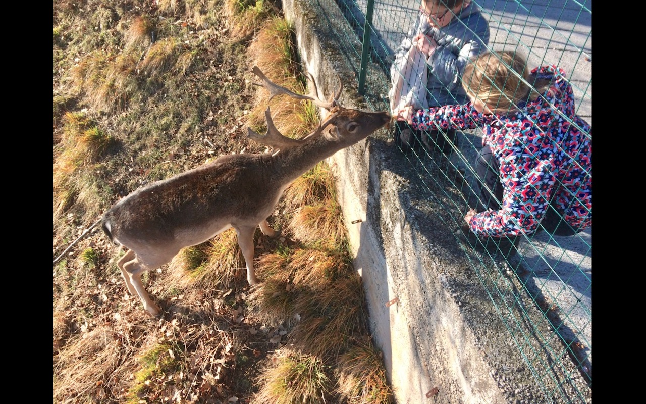 Two young friends feed semi-wild deer in Lago di Garda, Italy (Alps)