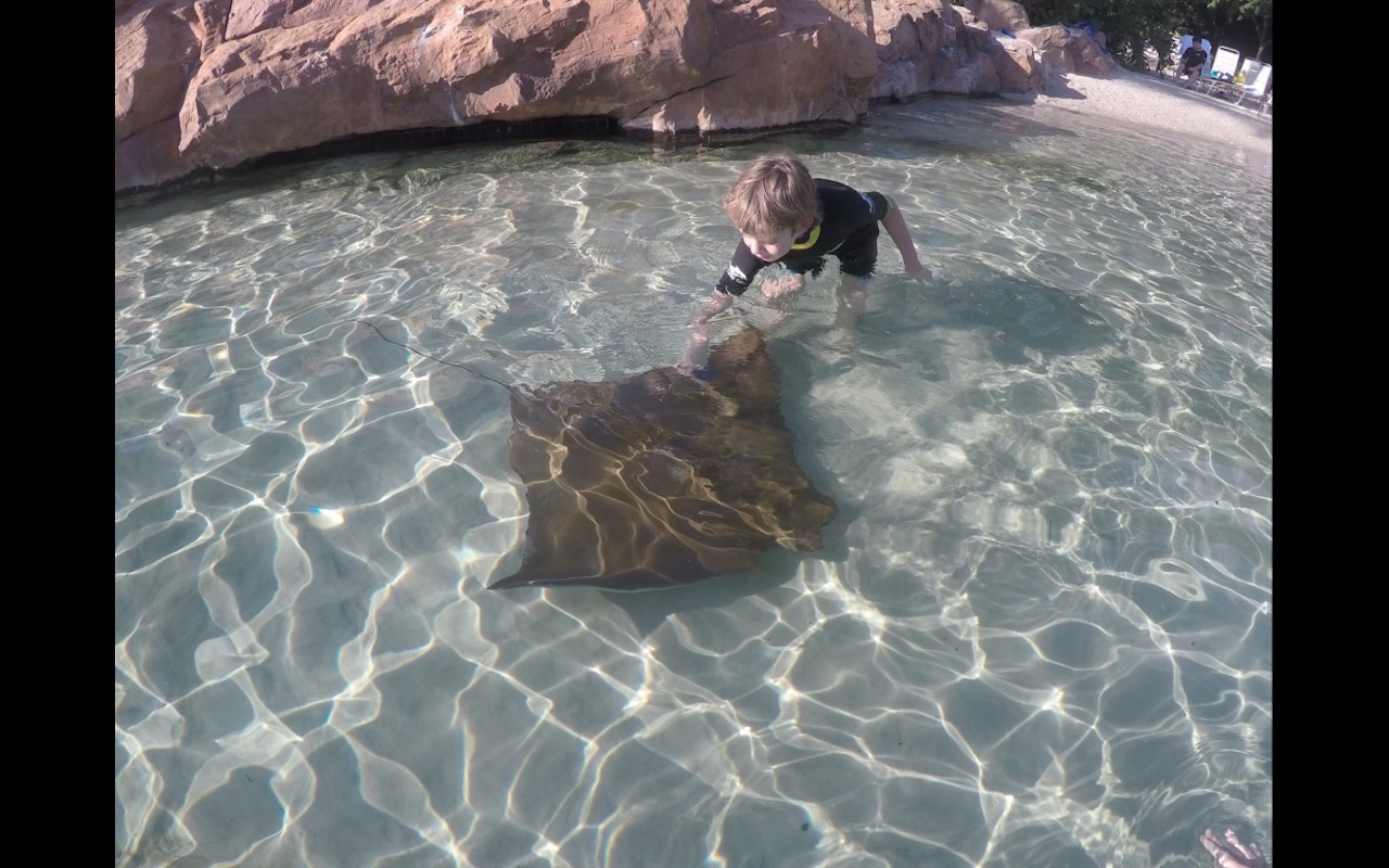 A young boy pets a sting ray at Discovery Cove, Orlando