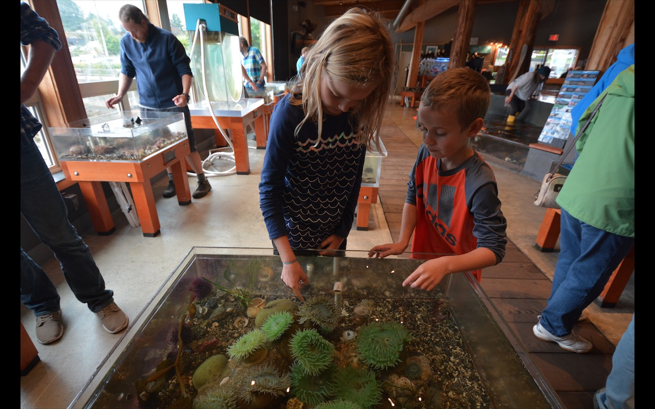 Children petting sea anemone at Ucluelet Aquarium, Vancouver Island, British Columbia
