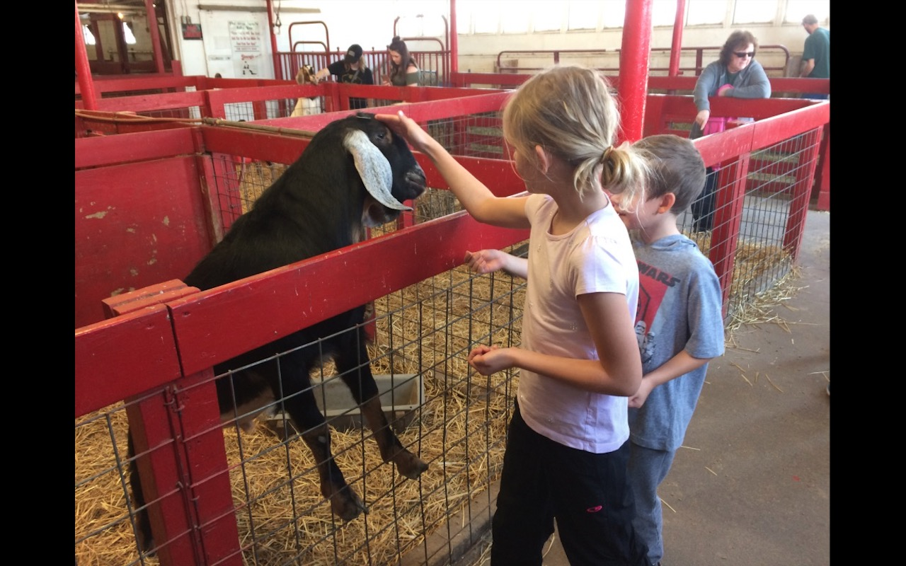Children petting a goat at Youngs Jersey Dairy Farm, Yellow Springs, Ohio
